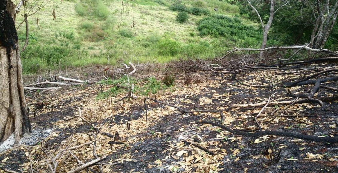 Polícia Ambiental identifica abertura de estrada e desmatamento em Itaocara