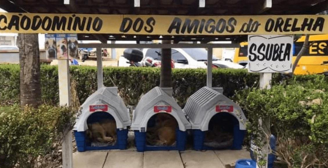 """Ssubea cria """"cãodomínio"""" para abrigar cães comunitários em Nova Friburgo"""