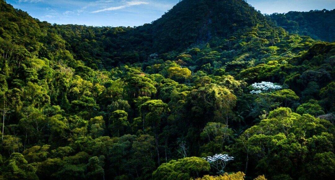 Nova Friburgo é líder no estado em Reservas Particulares de Patrimônio Ambiental
