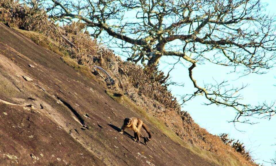Aperibé: Animais reaparecem na Serra da Bolívia após preservação ambiental