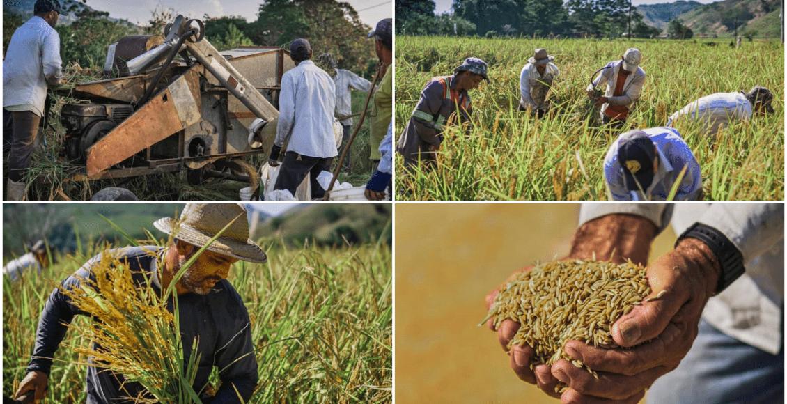 Encontro dos produtores de arroz anã de Porto Marinho acontece online