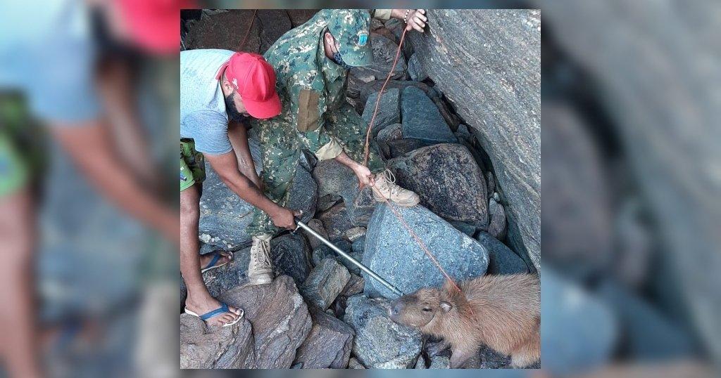 Guarda Ambiental resgata capivara presa em gruta na Região dos Lagos