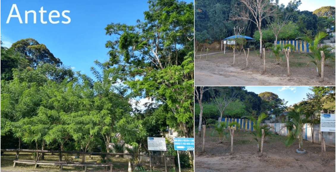 Moradores de Cordeiro indagam corte de árvores na Mata do Posto Zootécnico