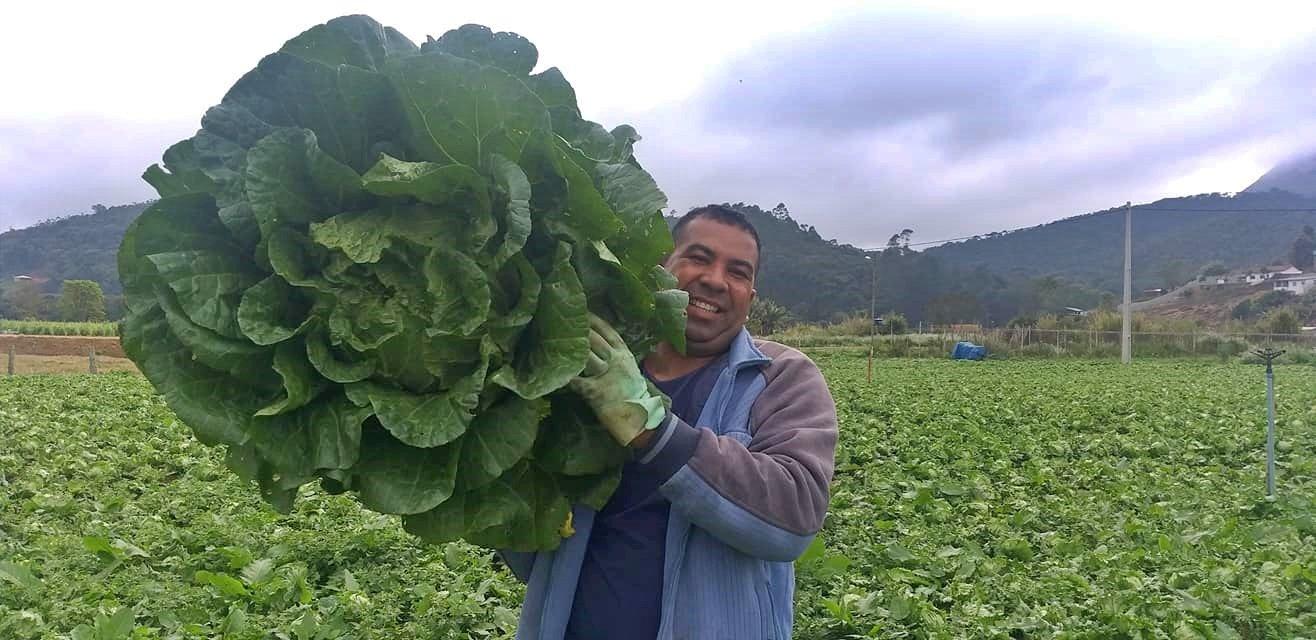 Produtor rural de Nova Friburgo colhe acelga gigante com mais de 9 quilos