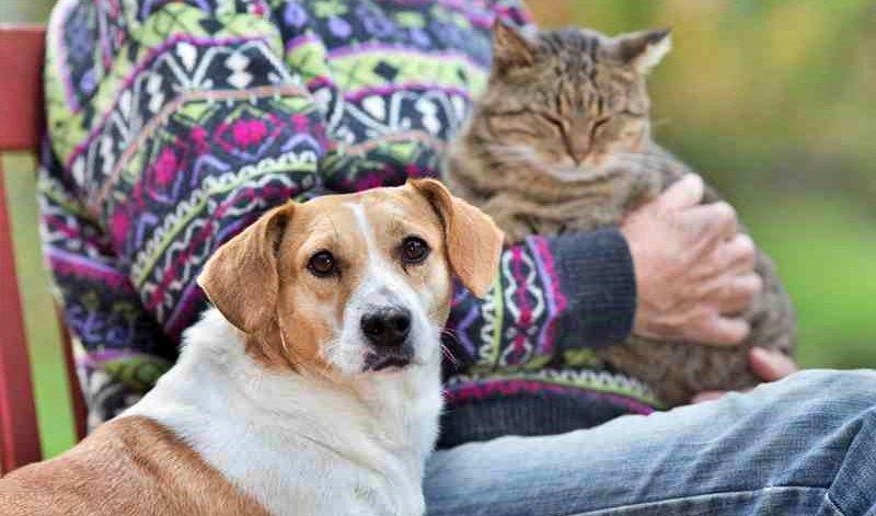Nova Friburgo realiza campanha de adoção responsável no próximo sábado