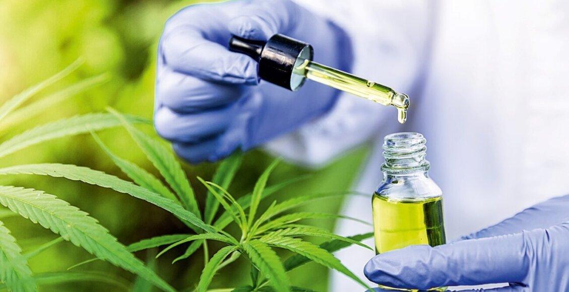 Búzios é a primeira cidade do Brasil a liberar a cannabis medicinal