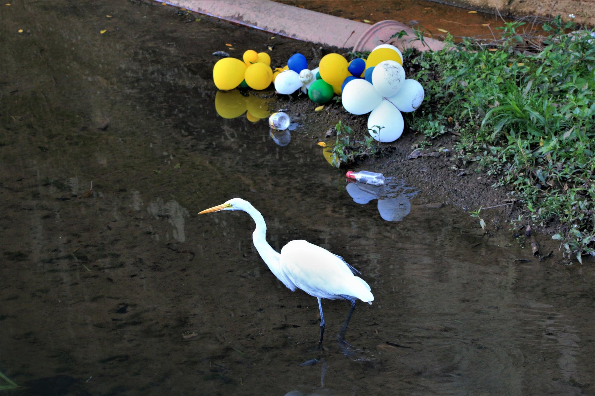 Friburgo: Natureza divide espaço com lixo jogado por pessoas no Rio Bengalas
