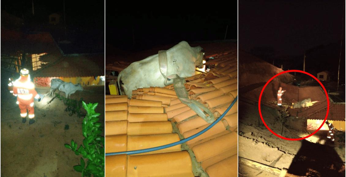 Vaca é resgatada após ficar pendurada em telhado em Além Paraíba