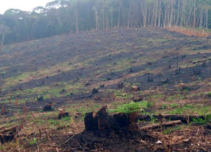 Polícia Ambiental flagra grande área desmatada em Duas Barras