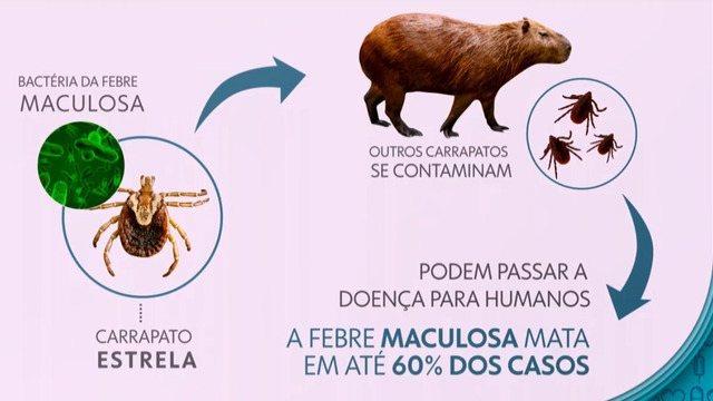 Transmissão da Febre Maculosa - Carrapato