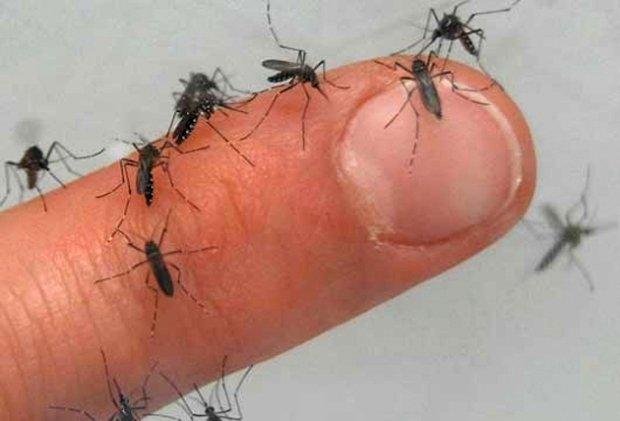 RJ: Municípios da região sofrem com a temporada de infestação dos pernilongos