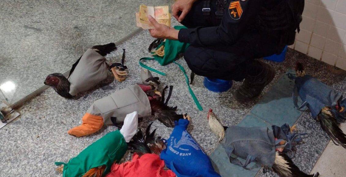 Polícia frustra rinha de galos em Cordeiro e seis homens são autuados