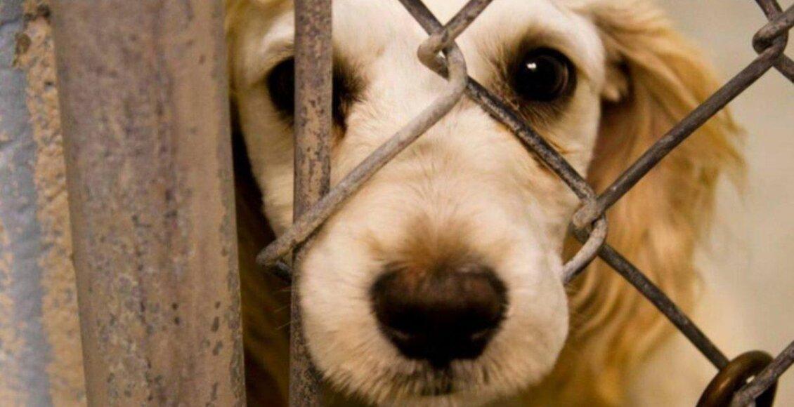 Friburgo: agressor de animais será obrigado a custear despesas veterinárias